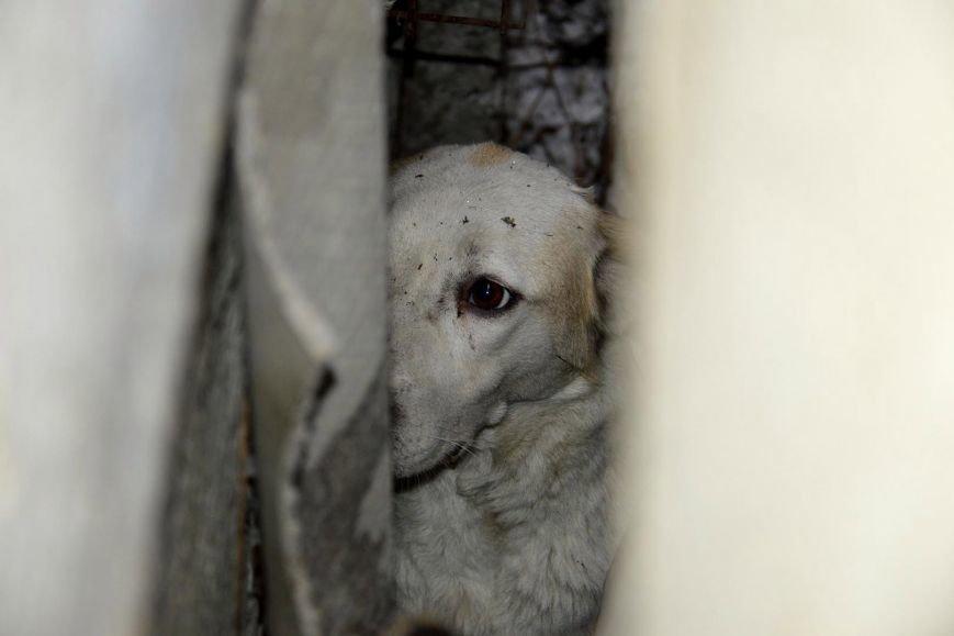 В Днепре спасли застрявшую на глубине двух метров собаку (ФОТО), фото-2