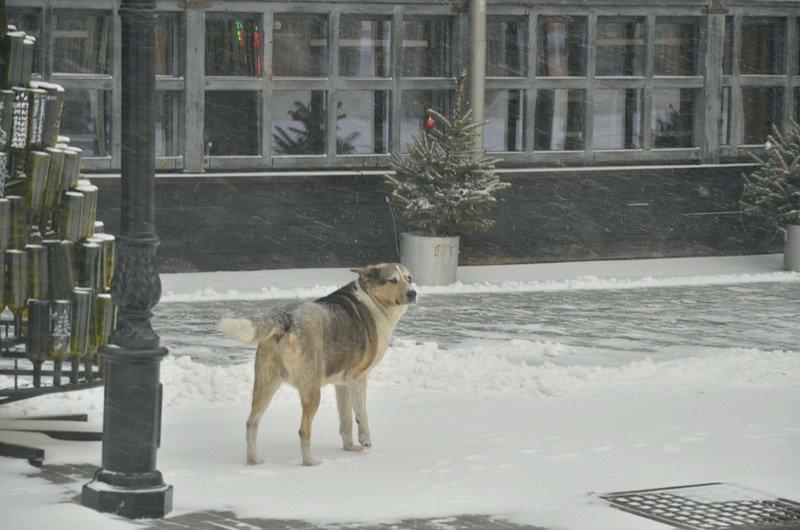 Снегопад укутал Одессу целиком всего за несколько часов (ВИДЕО, ФОТО), фото-6