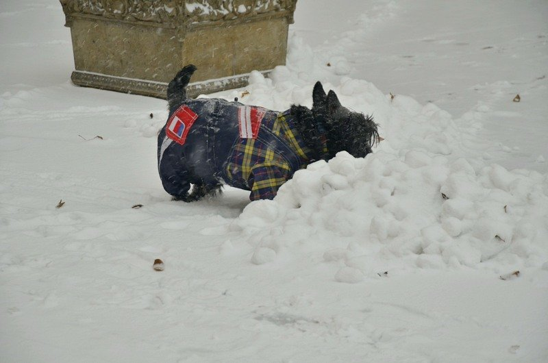 Снегопад укутал Одессу целиком всего за несколько часов (ВИДЕО, ФОТО), фото-14