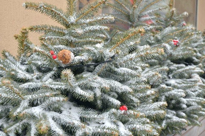 Снегопад укутал Одессу целиком всего за несколько часов (ВИДЕО, ФОТО), фото-13