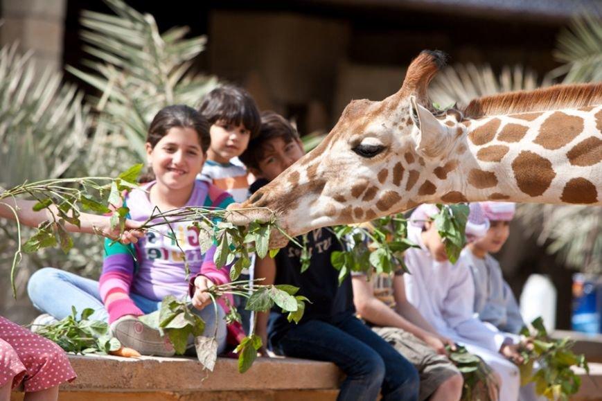 Куда сходить с детьми: водные приключения, мир Феррари, парк дикой жизни, зоопарки, оазисы и парк прыжков Bounce Abu Dhabi, фото-1