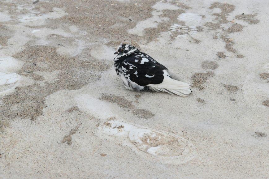 На одесском побережье ветер сносит снег в море (ФОТО), фото-2