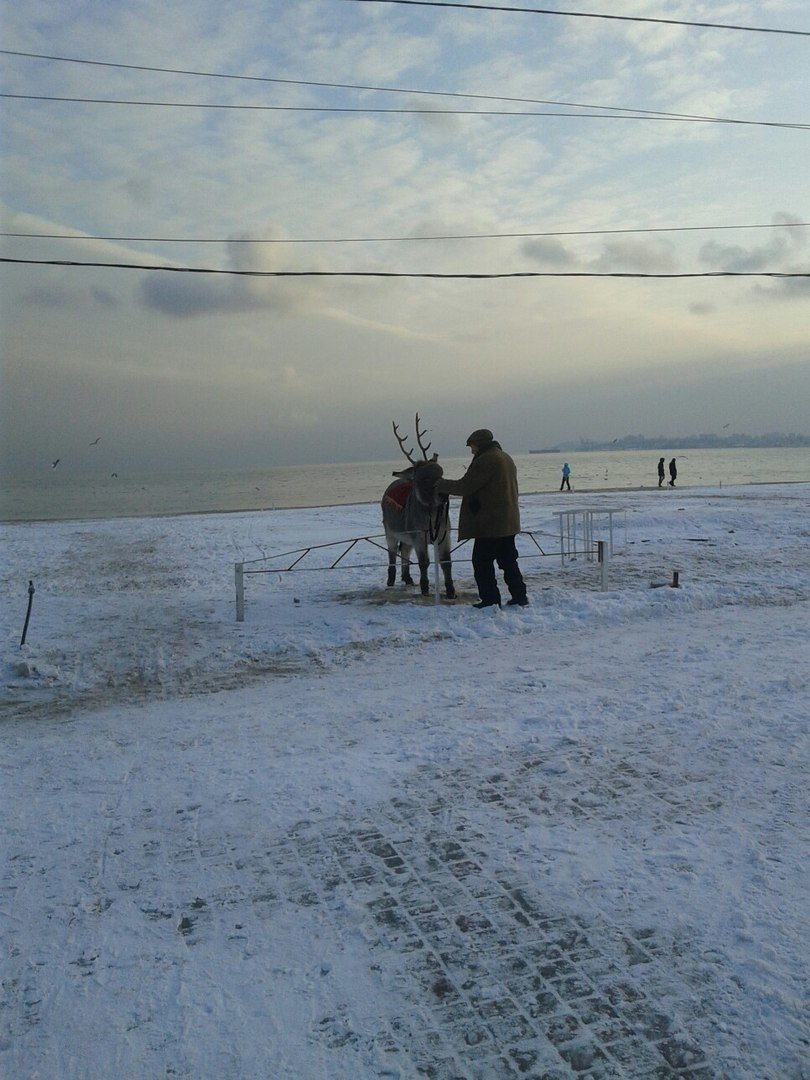 В Одессе олень прикрутил ослику оленьи рога (ФОТО), фото-1