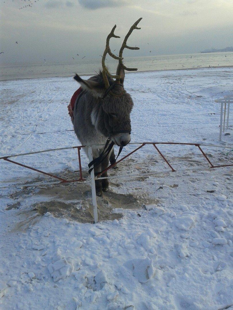 В Одессе олень прикрутил ослику оленьи рога (ФОТО), фото-2