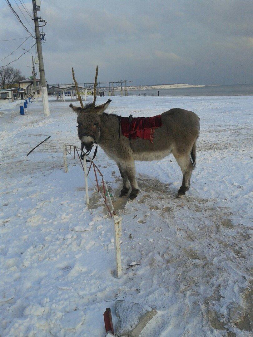 В Одессе олень прикрутил ослику оленьи рога (ФОТО), фото-3