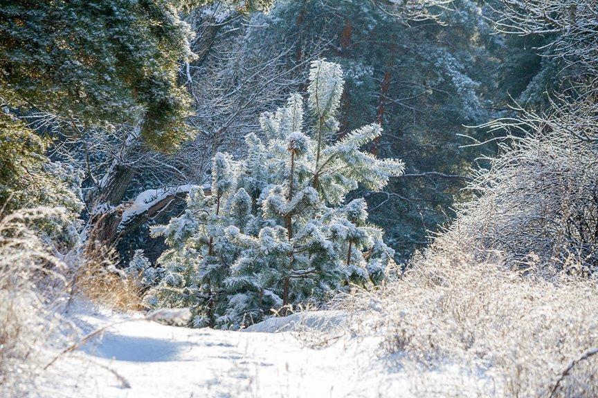 Зима на Хортице: фоторепортаж Алексея Толмачева, фото-12