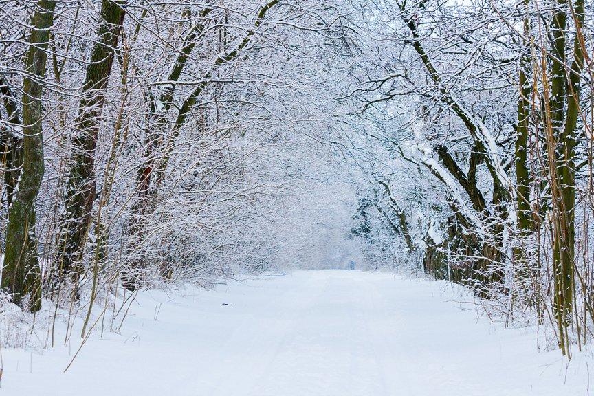 Зима на Хортице: фоторепортаж Алексея Толмачева, фото-4