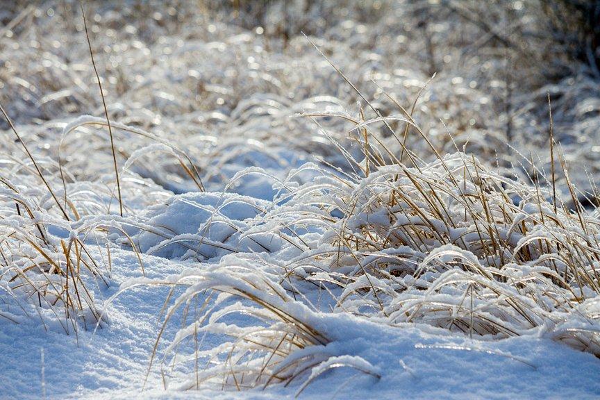 Зима на Хортице: фоторепортаж Алексея Толмачева, фото-17