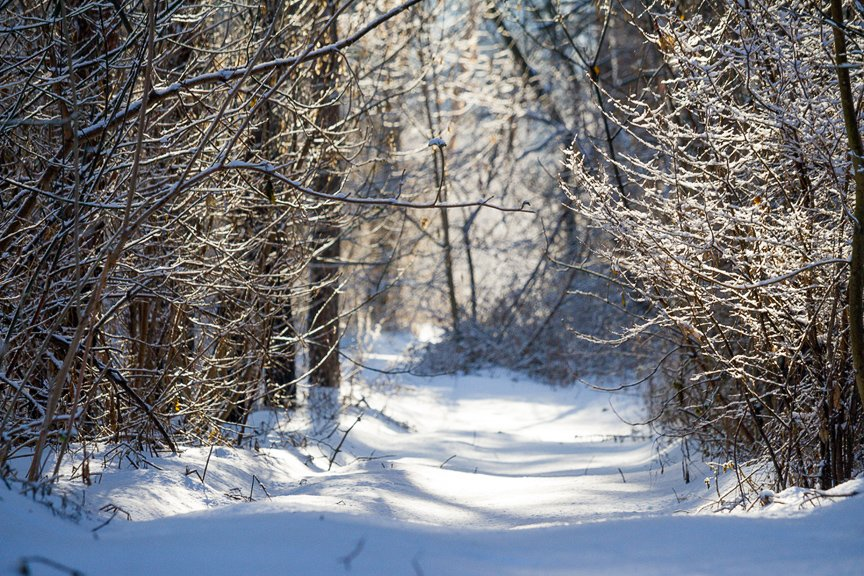Зима на Хортице: фоторепортаж Алексея Толмачева, фото-15