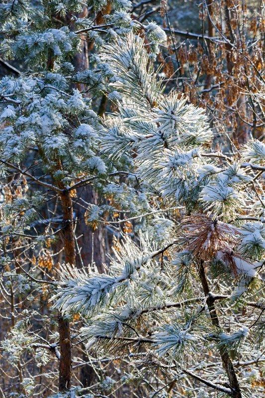 Зима на Хортице: фоторепортаж Алексея Толмачева, фото-16
