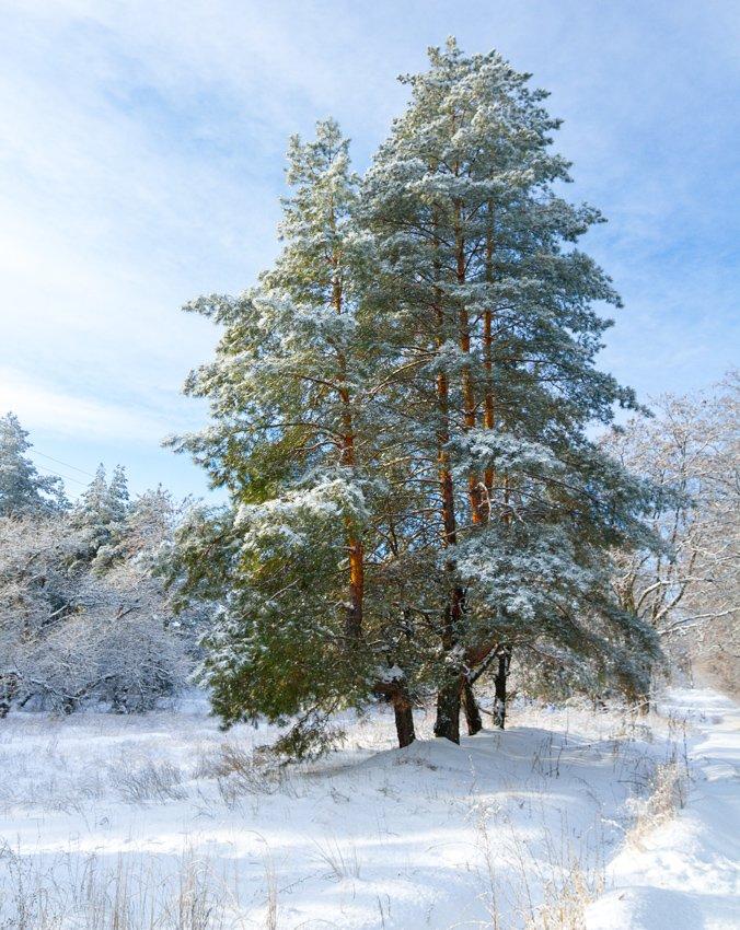 Зима на Хортице: фоторепортаж Алексея Толмачева, фото-11