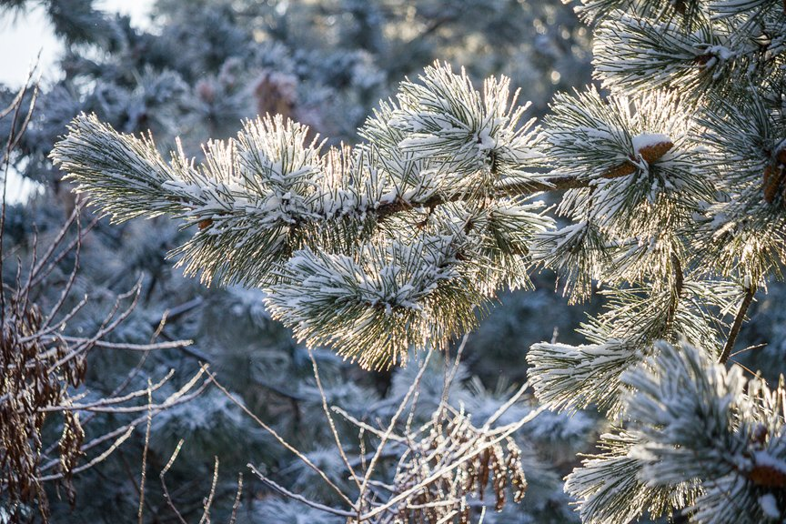 Зима на Хортице: фоторепортаж Алексея Толмачева, фото-18