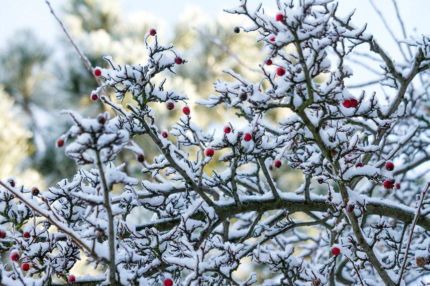 Зима на Хортице: фоторепортаж Алексея Толмачева, фото-13