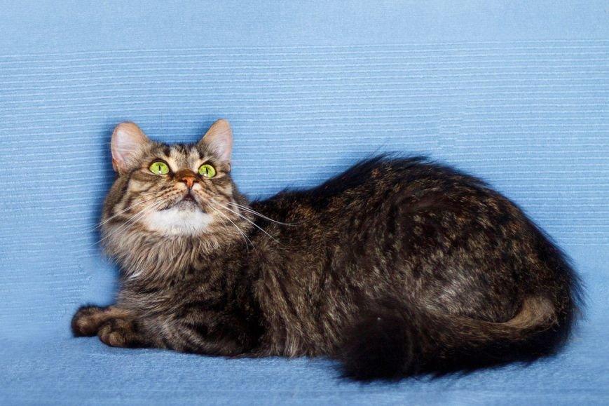 5 запорожских котов и собак, которые ищут хозяев, - ФОТО, фото-2