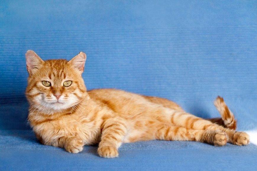 5 запорожских котов и собак, которые ищут хозяев, - ФОТО, фото-6