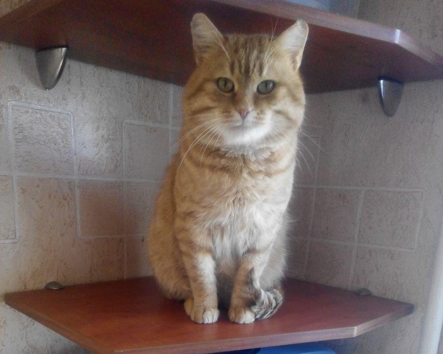 5 запорожских котов и собак, которые ищут хозяев, - ФОТО, фото-7