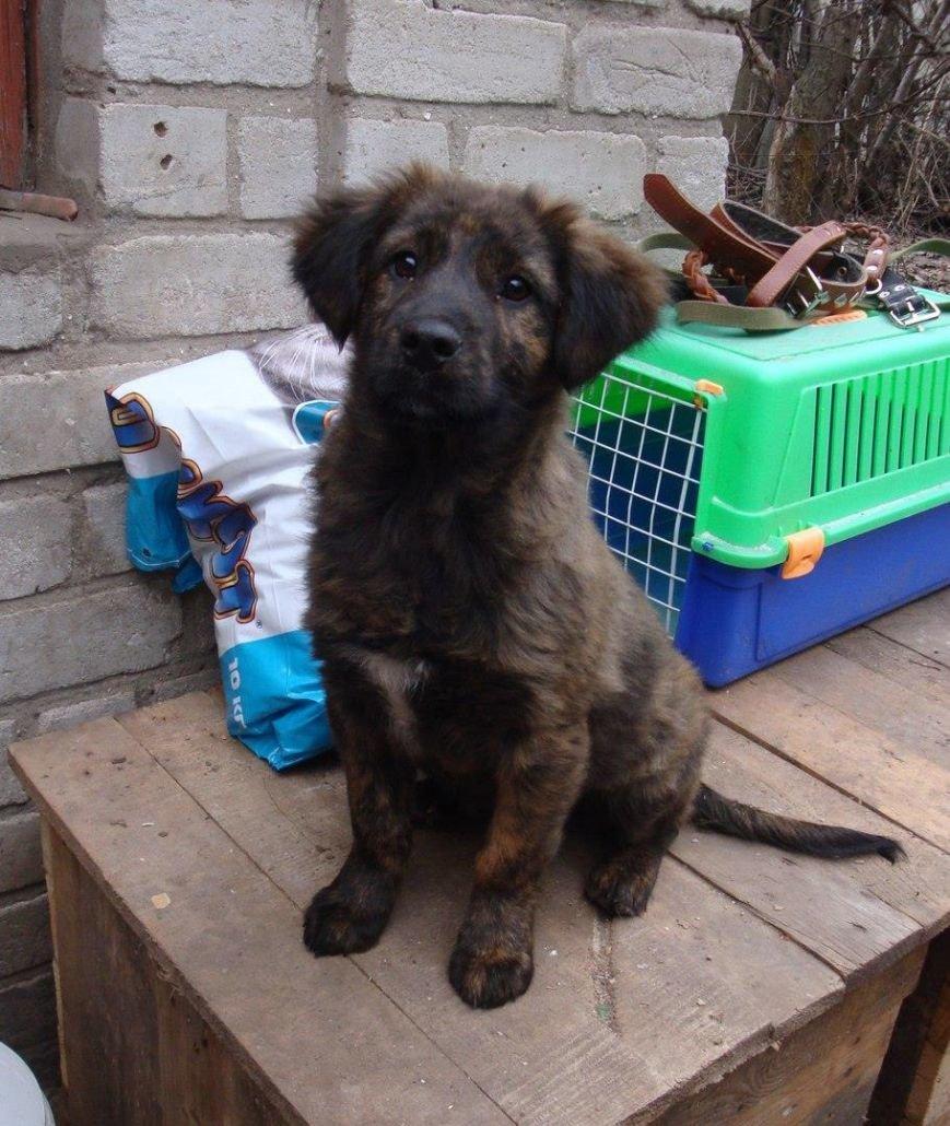 5 запорожских котов и собак, которые ищут хозяев, - ФОТО, фото-5