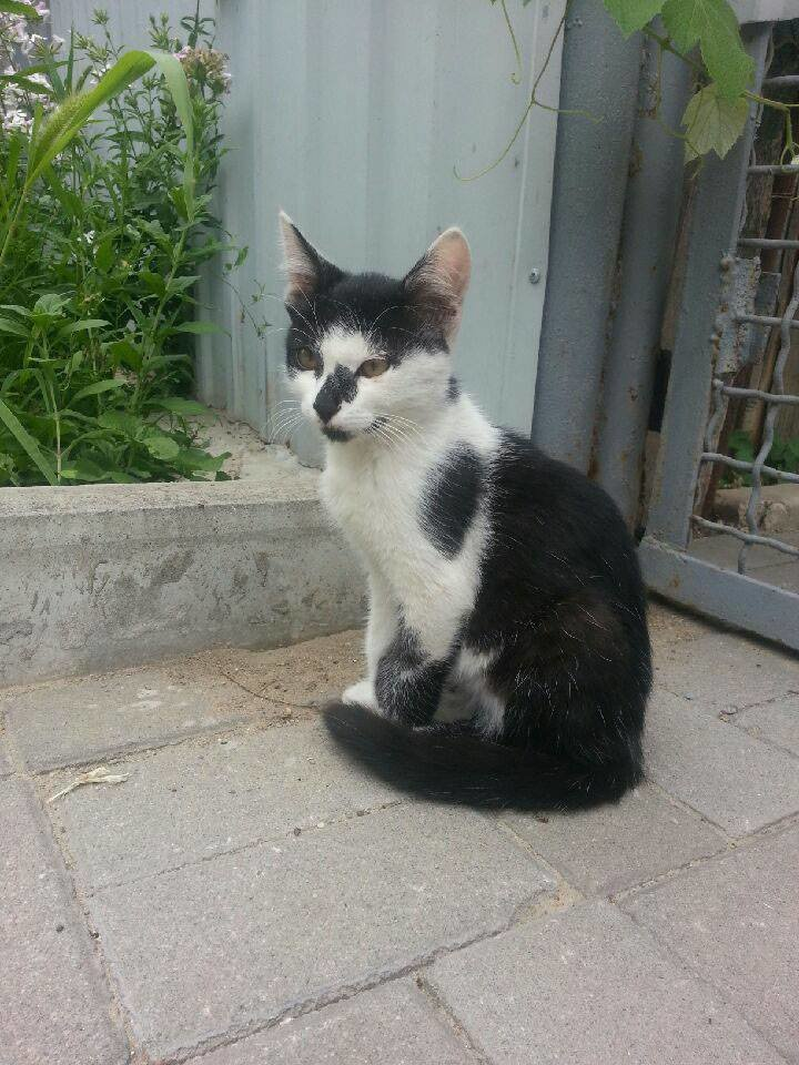 5 запорожских котов и собак, которые ищут хозяев, - ФОТО, фото-8