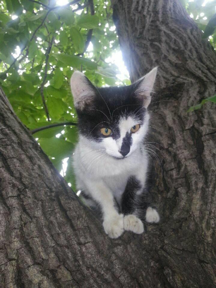 5 запорожских котов и собак, которые ищут хозяев, - ФОТО, фото-9