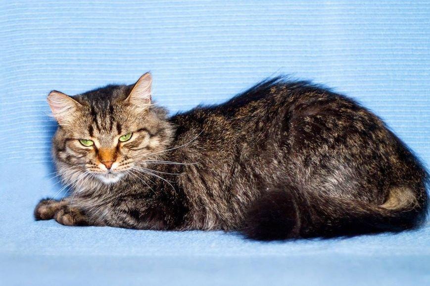 5 запорожских котов и собак, которые ищут хозяев, - ФОТО, фото-3