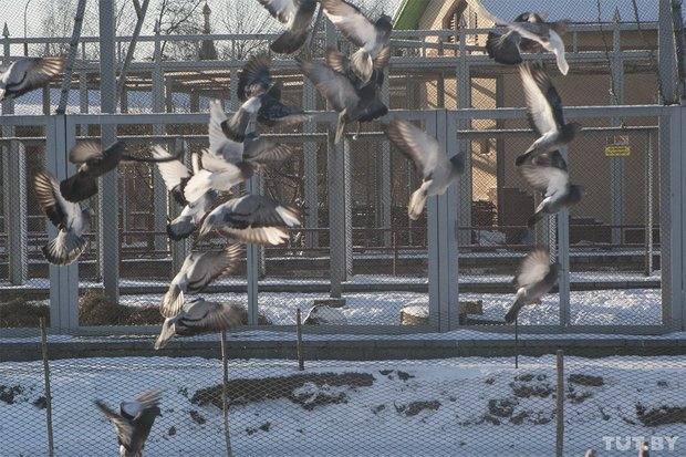 grodno_zoopark_zima54