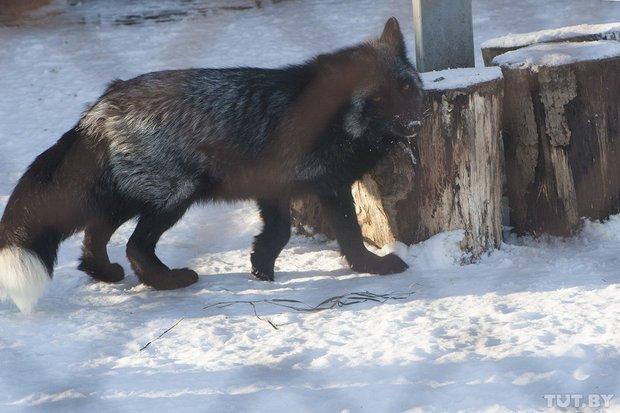 grodno_zoopark_zima56