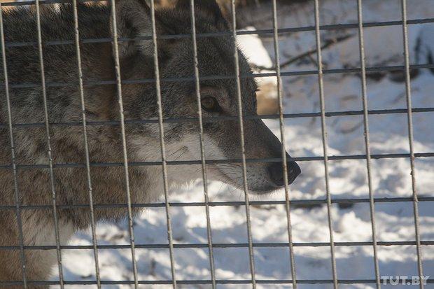 grodno_zoopark_zima23