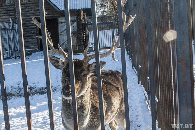 grodno_zoopark_zima_2