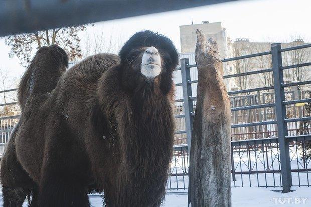 grodno_zoopark_zima88