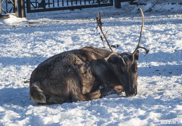 grodno_zoopark_zima_1