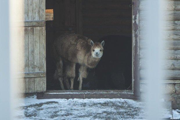 grodno_zoopark_zima
