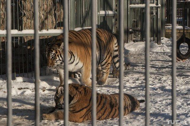grodno_zoopark_zima7