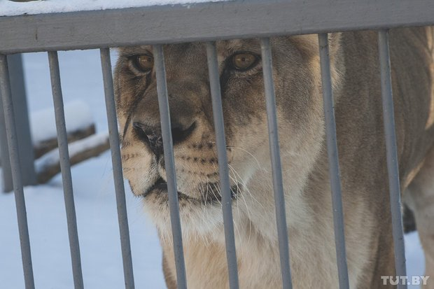 grodno_zoopark_zima9