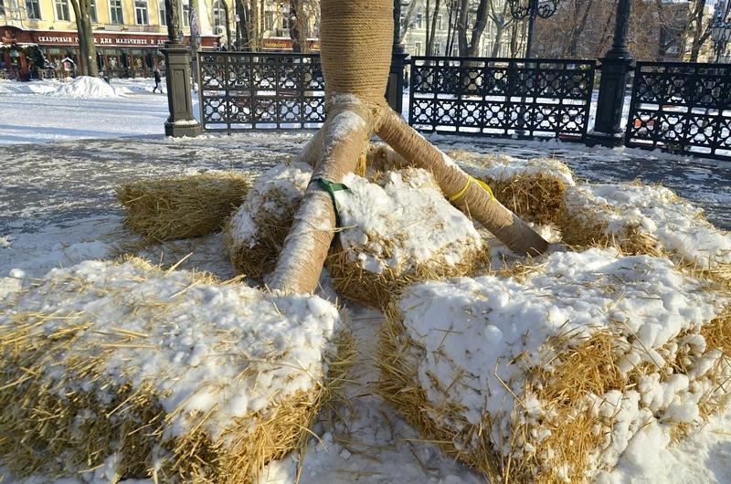 В одесском Горсаду хулиганы разрушили 3-метровый дидух (ФОТО), фото-4