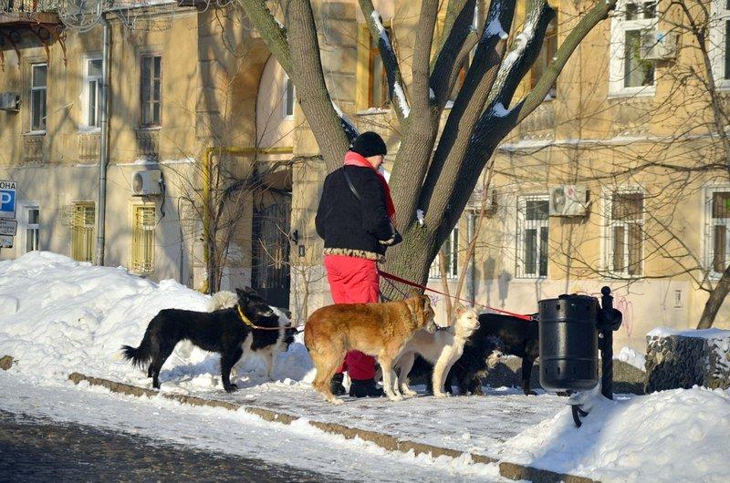Серые будни вернутся в Одессу: наступила вторая неделя нового года (ФОТО), фото-4