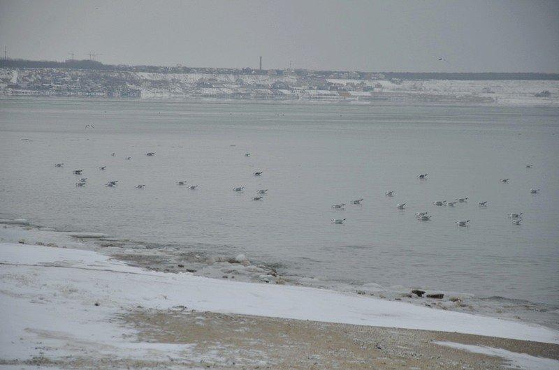 Море в Одесском заливе не успело замерзнуть (ФОТО), фото-4