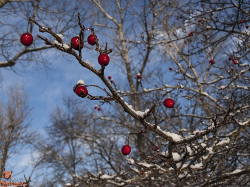Зимнее Запорожье: вид из байдарки, - ФОТОРЕПОРТАЖ, фото-11