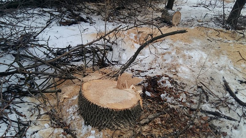 В Бахмутском районе за незаконную вырубку леса задержаны девять человек (ФОТО), фото-4