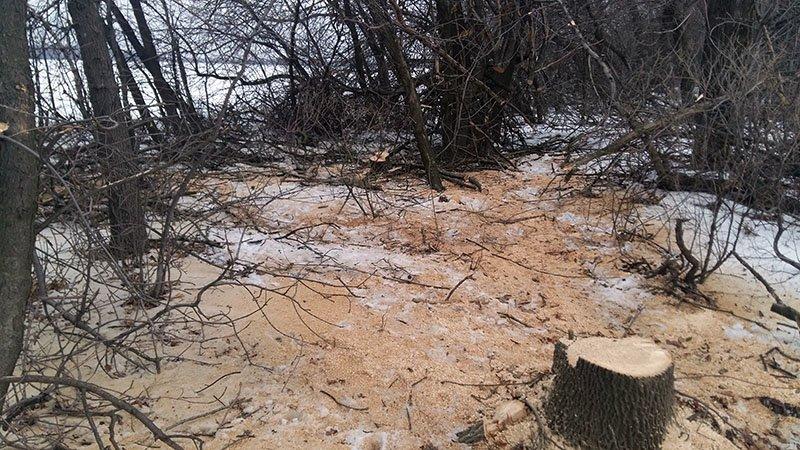 В Бахмутском районе за незаконную вырубку леса задержаны девять человек (ФОТО), фото-9