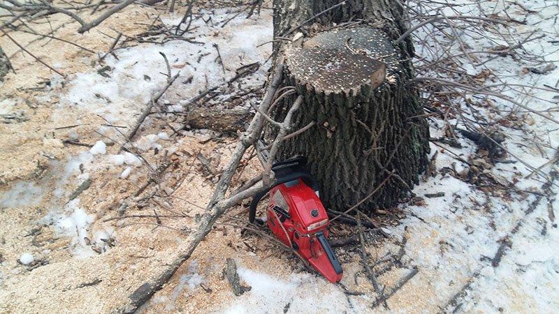 В Бахмутском районе за незаконную вырубку леса задержаны девять человек (ФОТО), фото-3