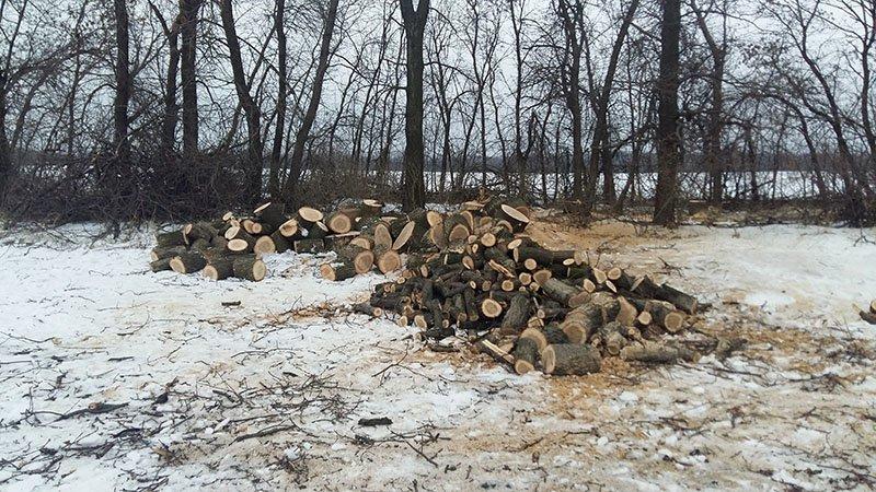 В Бахмутском районе за незаконную вырубку леса задержаны девять человек (ФОТО), фото-11