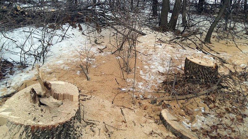 В Бахмутском районе за незаконную вырубку леса задержаны девять человек (ФОТО), фото-10