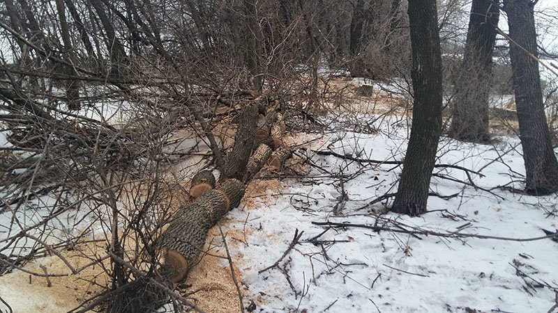 В Бахмутском районе за незаконную вырубку леса задержаны девять человек (ФОТО), фото-6