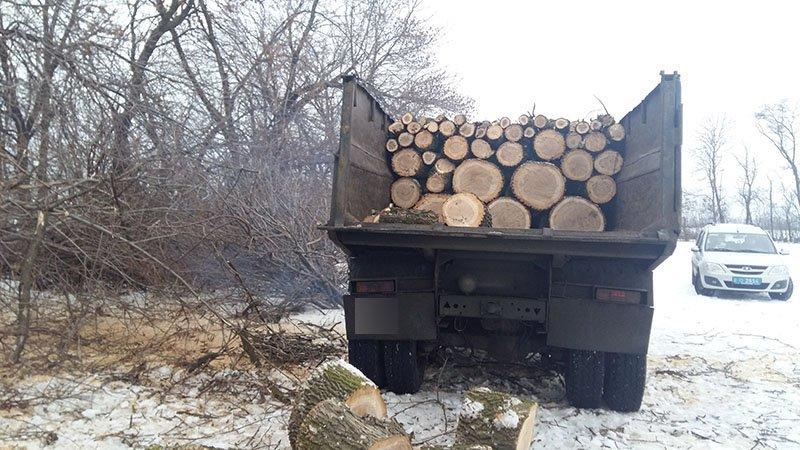 В Бахмутском районе за незаконную вырубку леса задержаны девять человек (ФОТО), фото-1