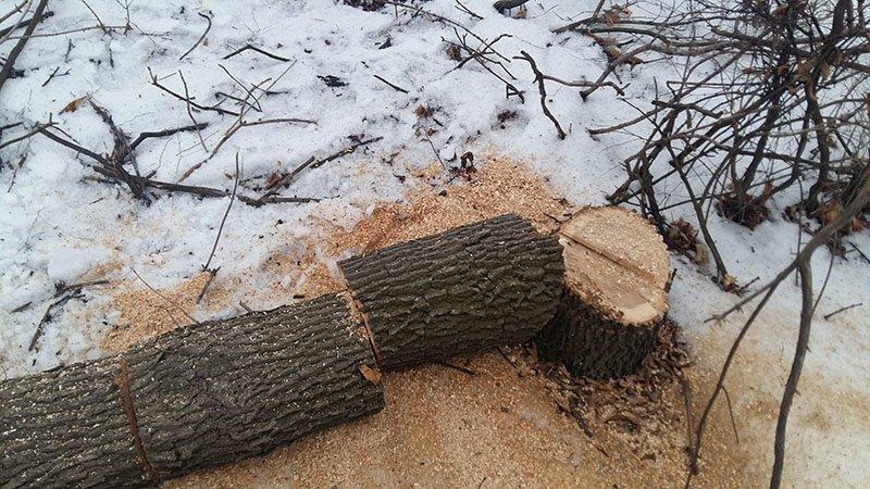 В Бахмутском районе за незаконную вырубку леса задержаны девять человек (ФОТО), фото-7