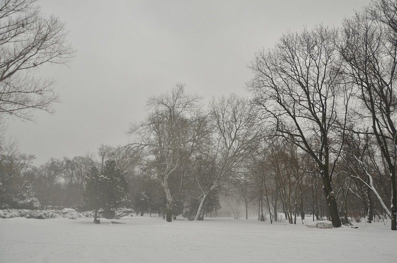 В центральном парке Одессы наркоман ловил кайф в кустах (ФОТО), фото-2