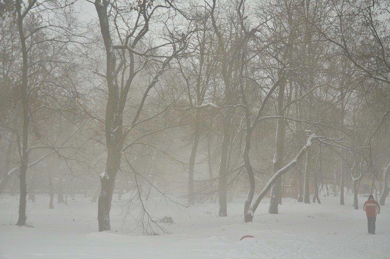 В центральном парке Одессы наркоман ловил кайф в кустах (ФОТО), фото-6