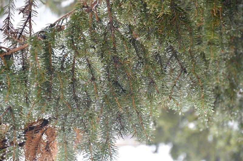 Снег начал таять, Одесса превратится в большой каток (ВИДЕО, ФОТО), фото-45