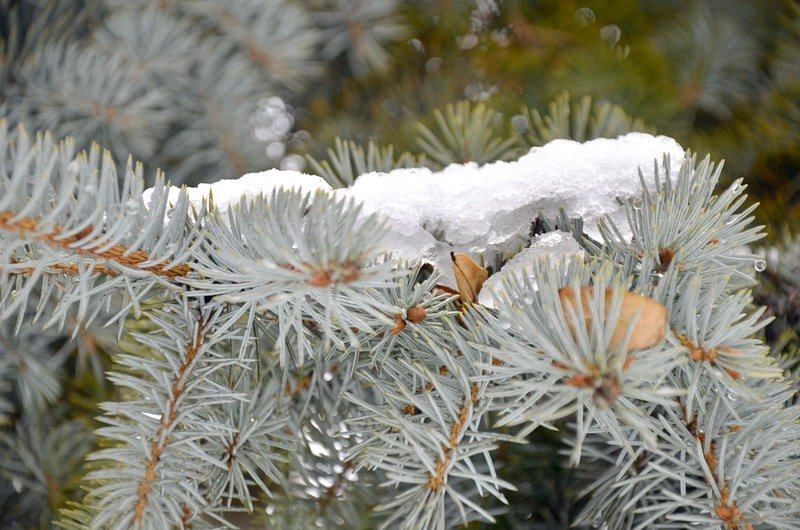 Снег начал таять, Одесса превратится в большой каток (ВИДЕО, ФОТО), фото-42
