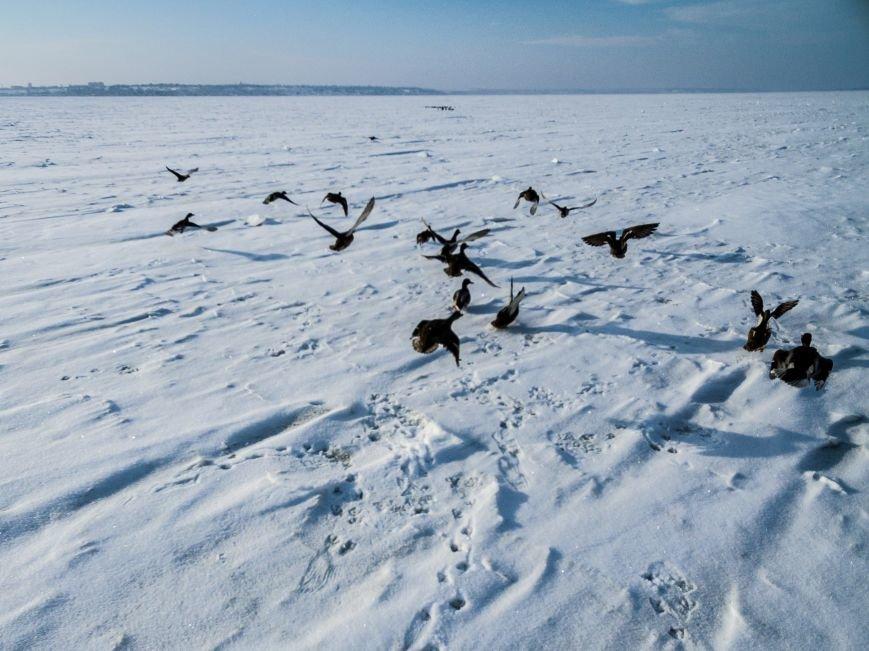 Красивые фото: В Одессе замерз Хаджибейский лиман (ФОТО), фото-2